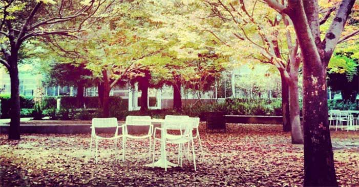 Empty table in the Fall